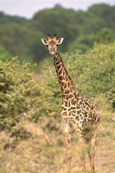 An Exhaustive List Of African Animals With Some Stunning Photos African Animals Animals List Of Animals