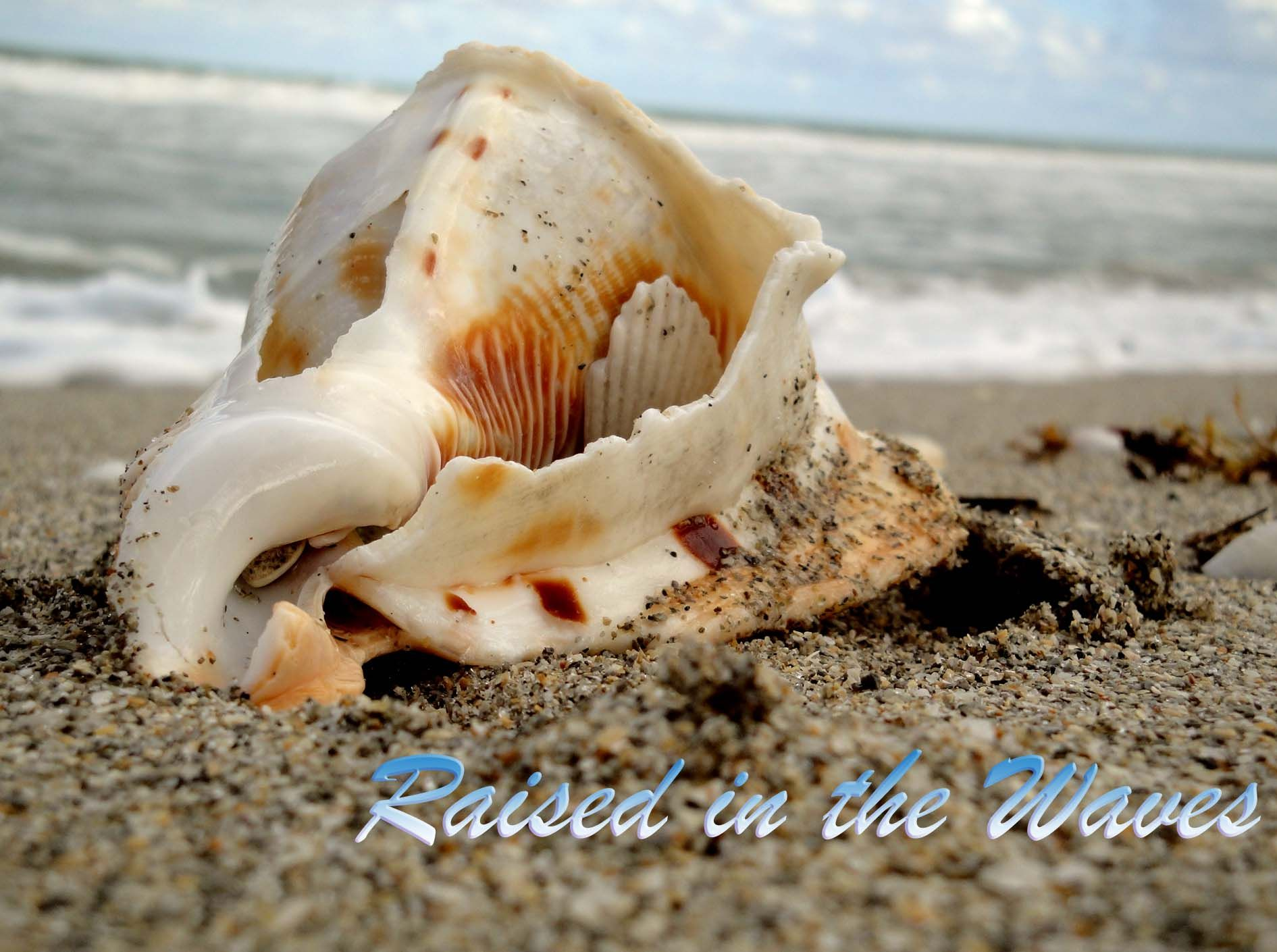 Captain Charlie S Reef Grill Juno Beach Fl