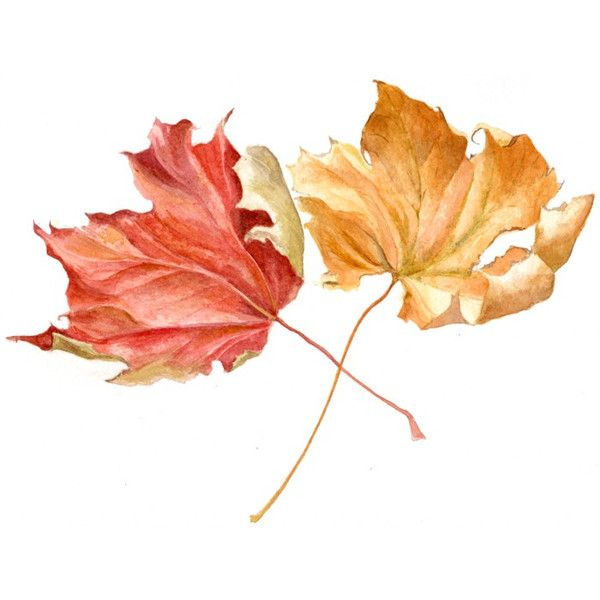 Autumn Leaves Still Life Painting Watercolour Watercolor