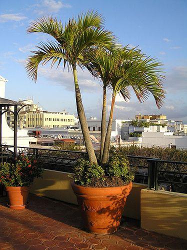Potted Palms Tropical Backyard