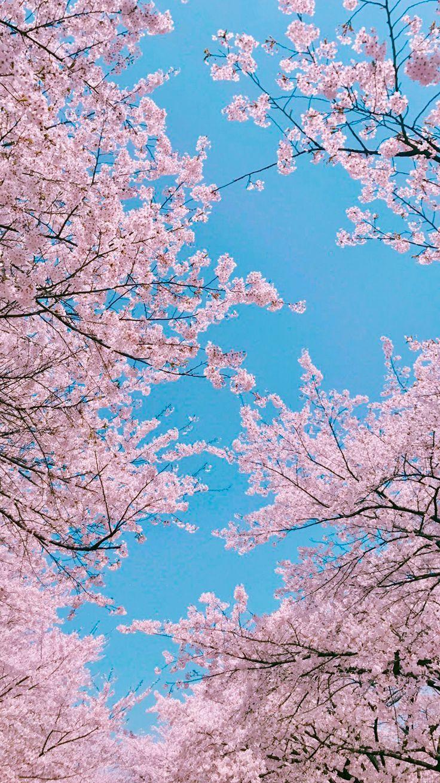 Himmel -  - #hintergrundbilder #simpleaestheticwallpaper