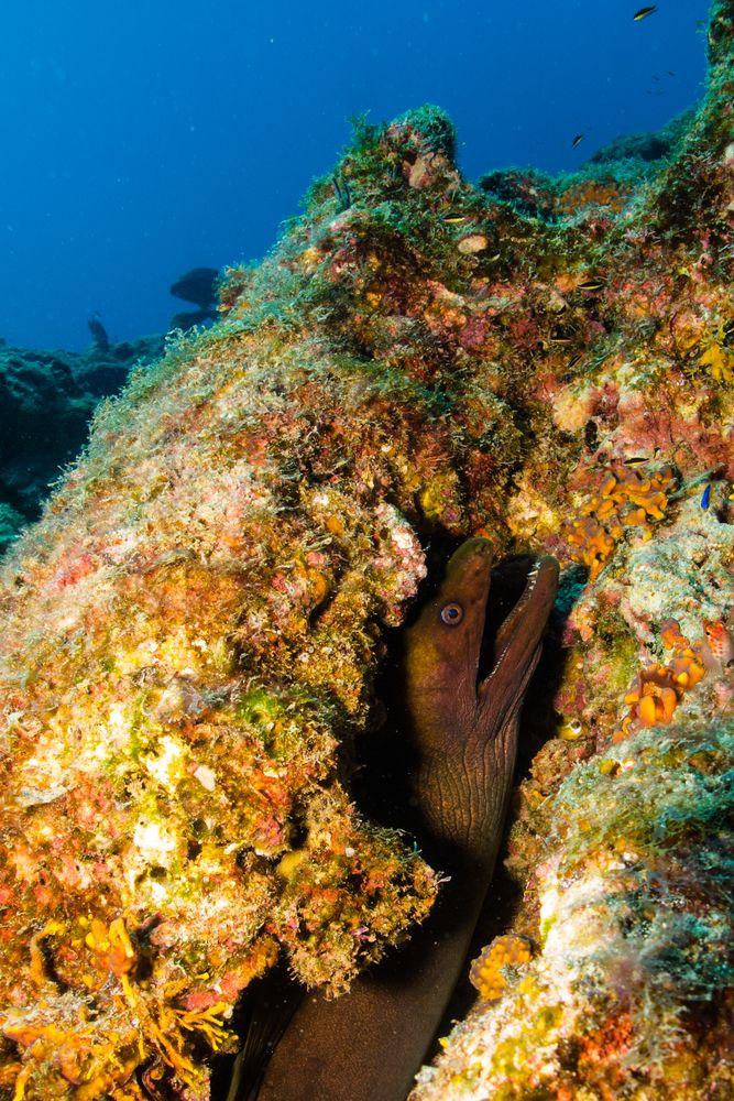 Asombrosas criaturas submarinas habitan las profundidades del #MarCortes. Descúbrelas en una expedisión de #buceo desde #Guaymas, Mexico. http://www.bestday.com.mx/Guaymas-San-Carlos/ReservaHoteles/