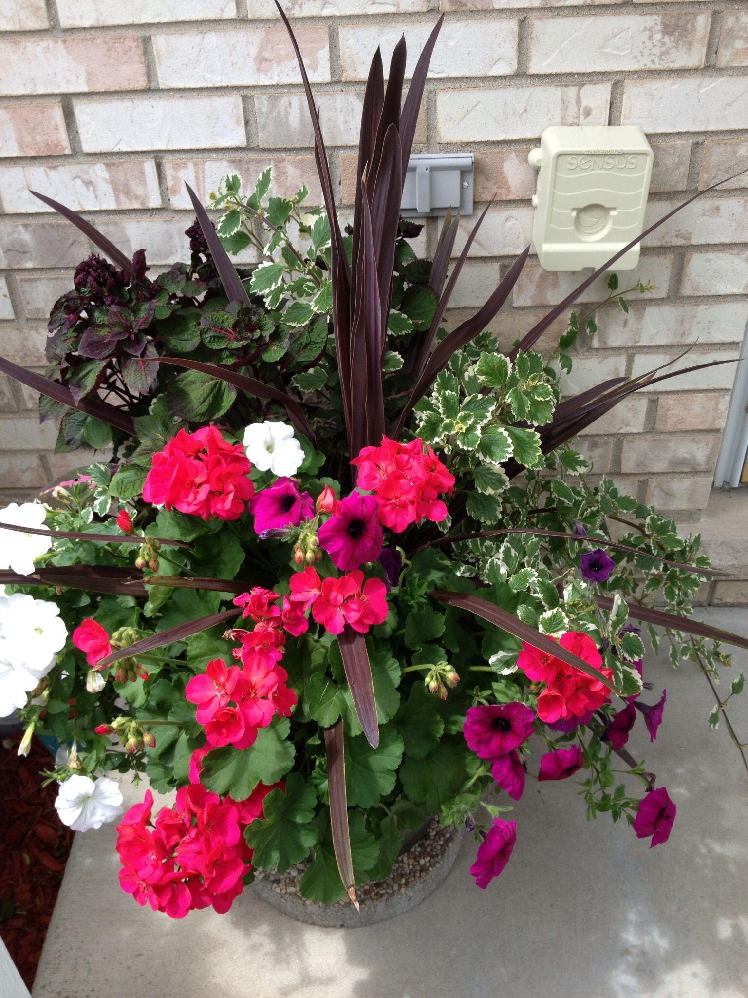 Potted Plants And The Necessary Spring Care: Beautiful Potted Plants I Bought At Costco.