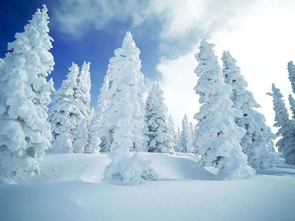 Wallpaper | wallpaper-natura-iarna