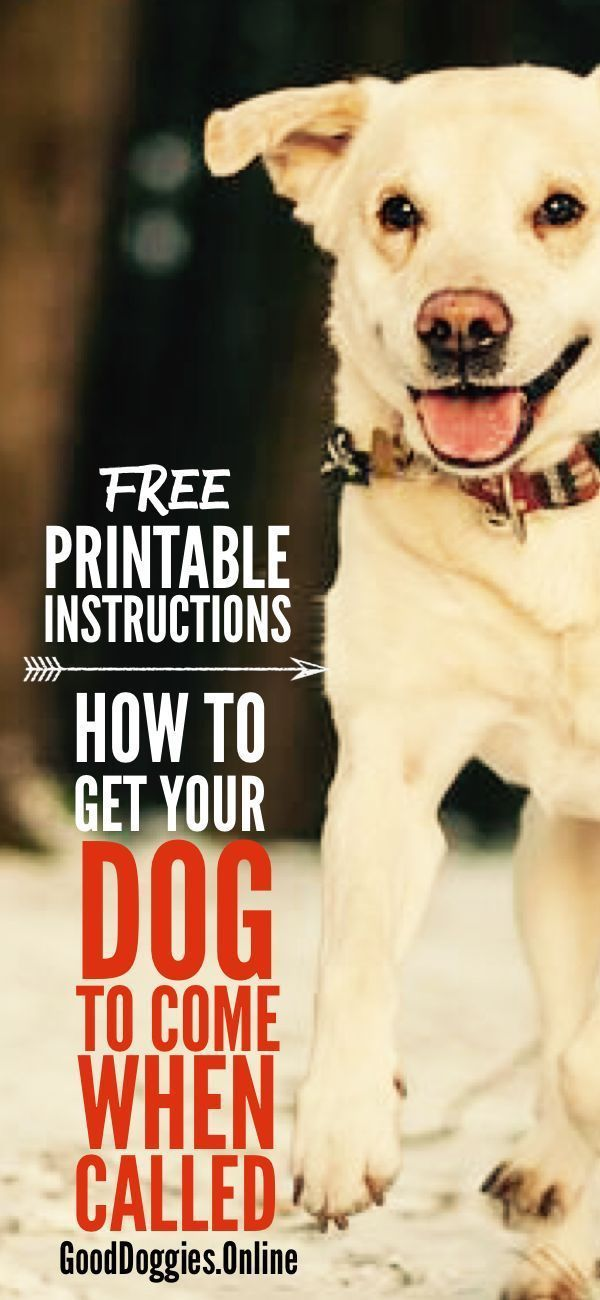Teach Your Dog To Come When Called With These 7 Easy Steps Plus