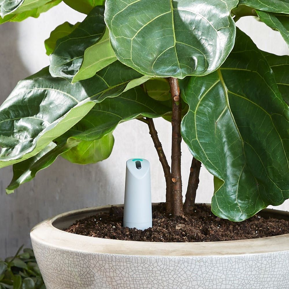 Never Kill A Houseplant Again With These Smart Watering Tools Plants Smart Garden House Plants