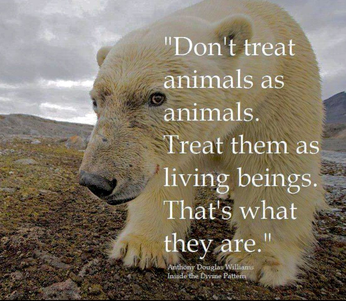 Anthony Douglas Williams Treat them as their highest being ...