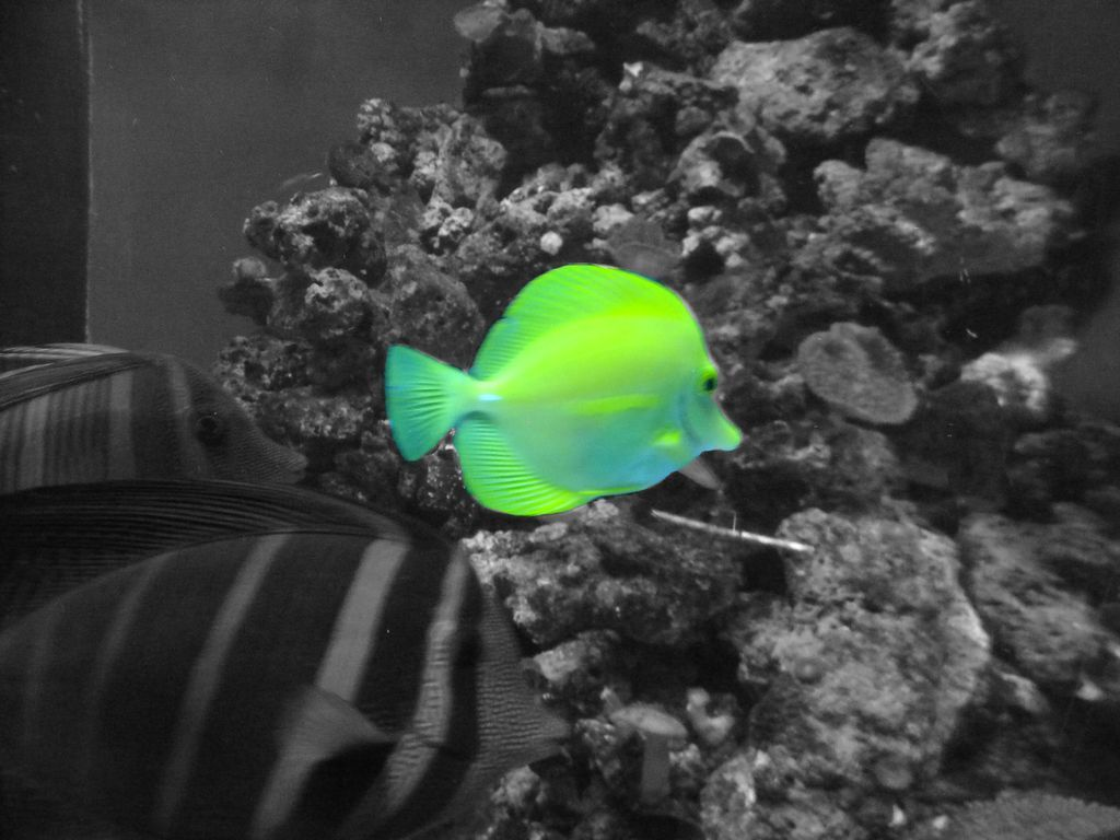 Colorize Black White Photos In GIMP Colour Splash Photography - Black and white photography with color accents