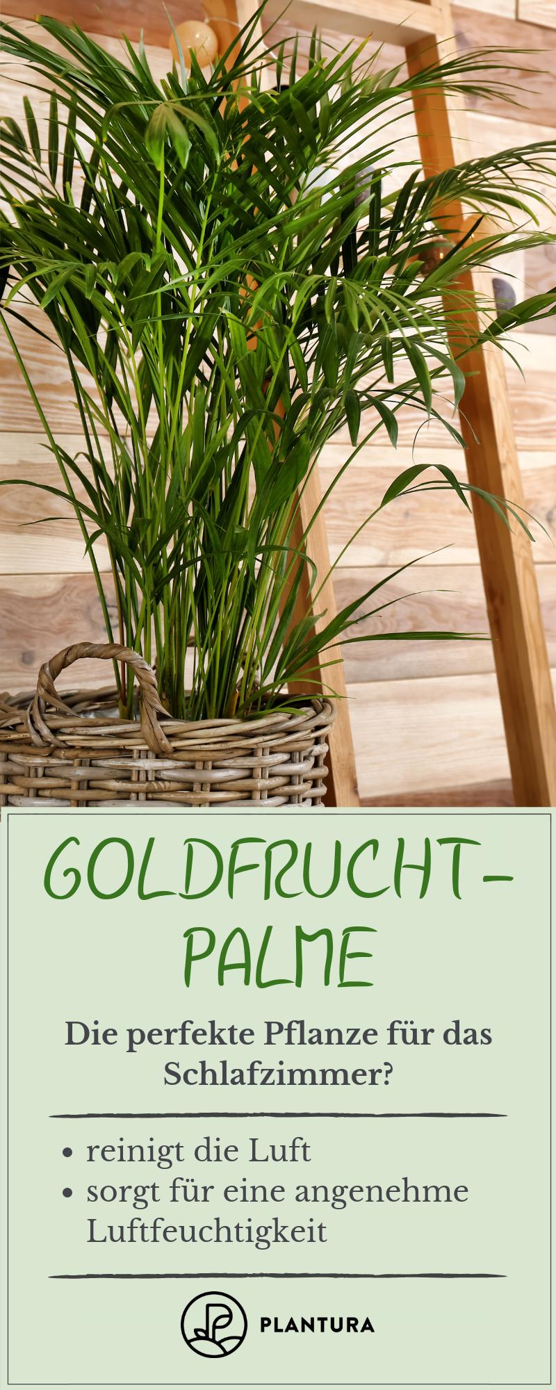 Pflanzen im Schlafzimmer: Vorteile, Nachteile und geeignete ...