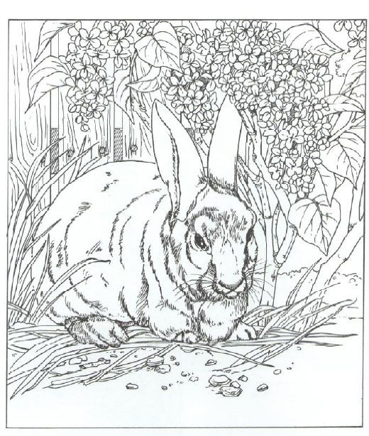 Worksheet. Most Rabbit species have a long ears hind legs longer than their
