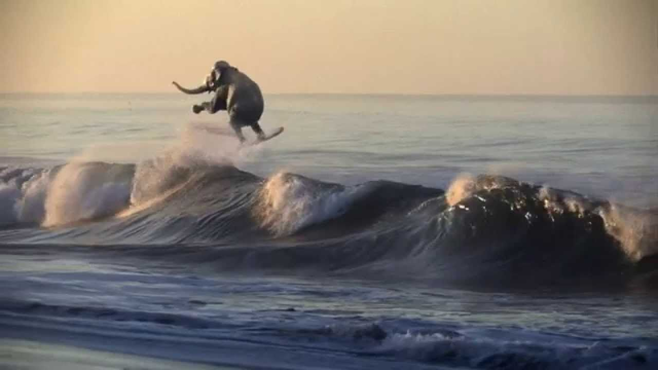 This Video Is A Elephant Surfing And It S A Great Way To Describe The Tradition Of Alabama Footba Alabama Elephant Alabama Crimson Tide Football Bama Football