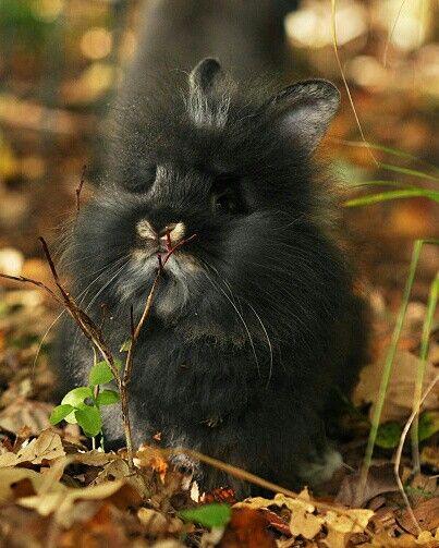 adorable bunny enjoying Autumn