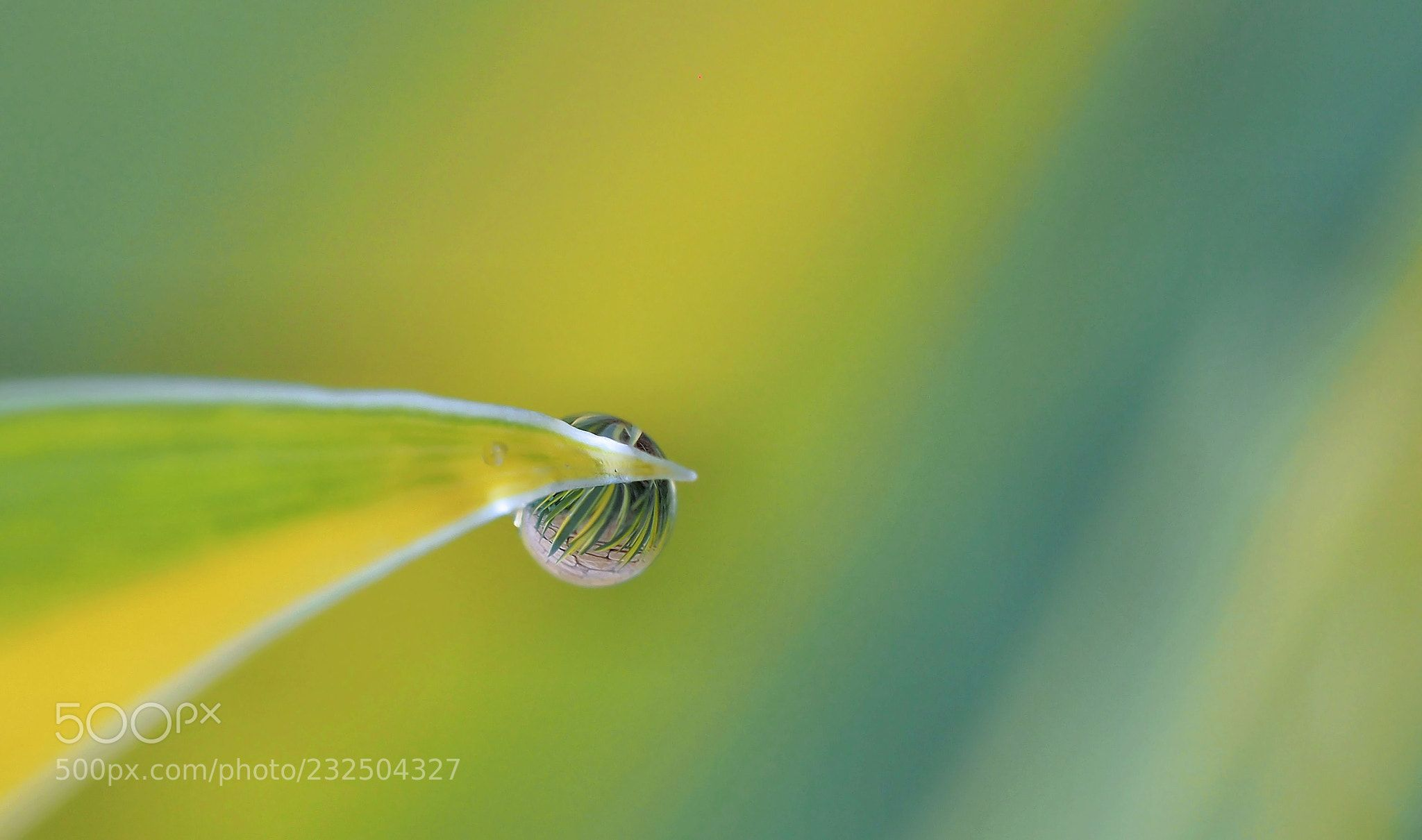 Delicate pearl of dew... (Thierry Dufour / Aubenas / France) #E-M5 #macro #photo #insect #nature