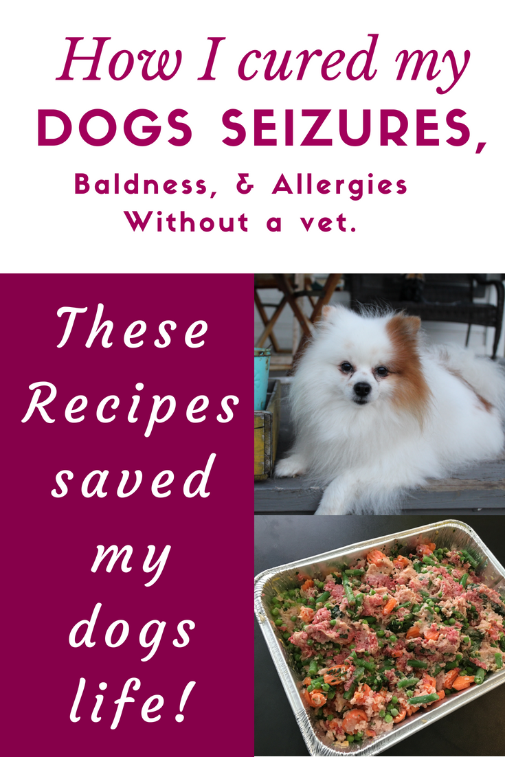 These Homemade Dog Food Recipes Cured My Dogs Seizures Hot Spots And Allergies Healthy Dog Food Recipes Homemade Dog Seizures Epilepsy In Dogs Dog Training