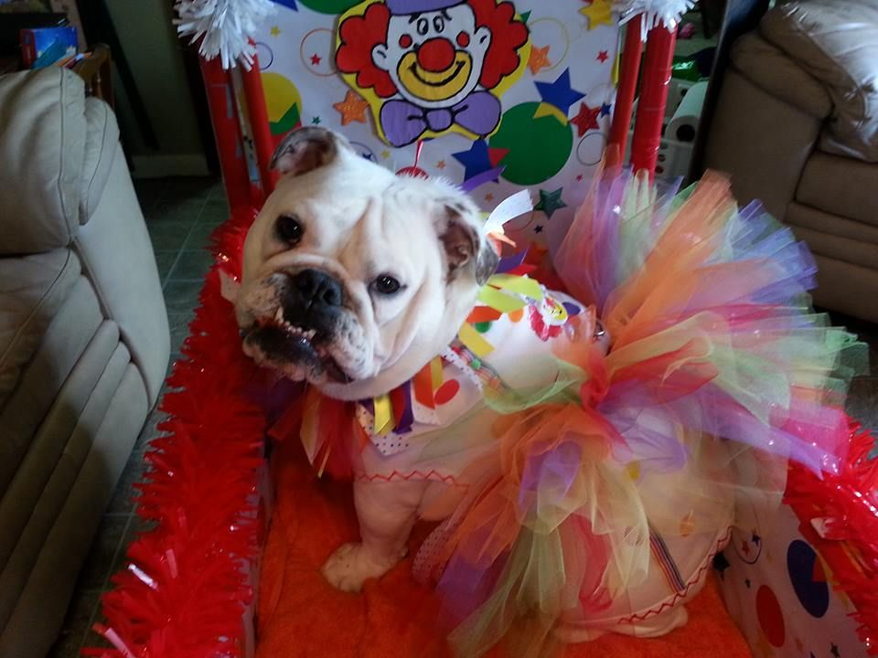 The Top Costumes For Your Bulldog This Halloween!