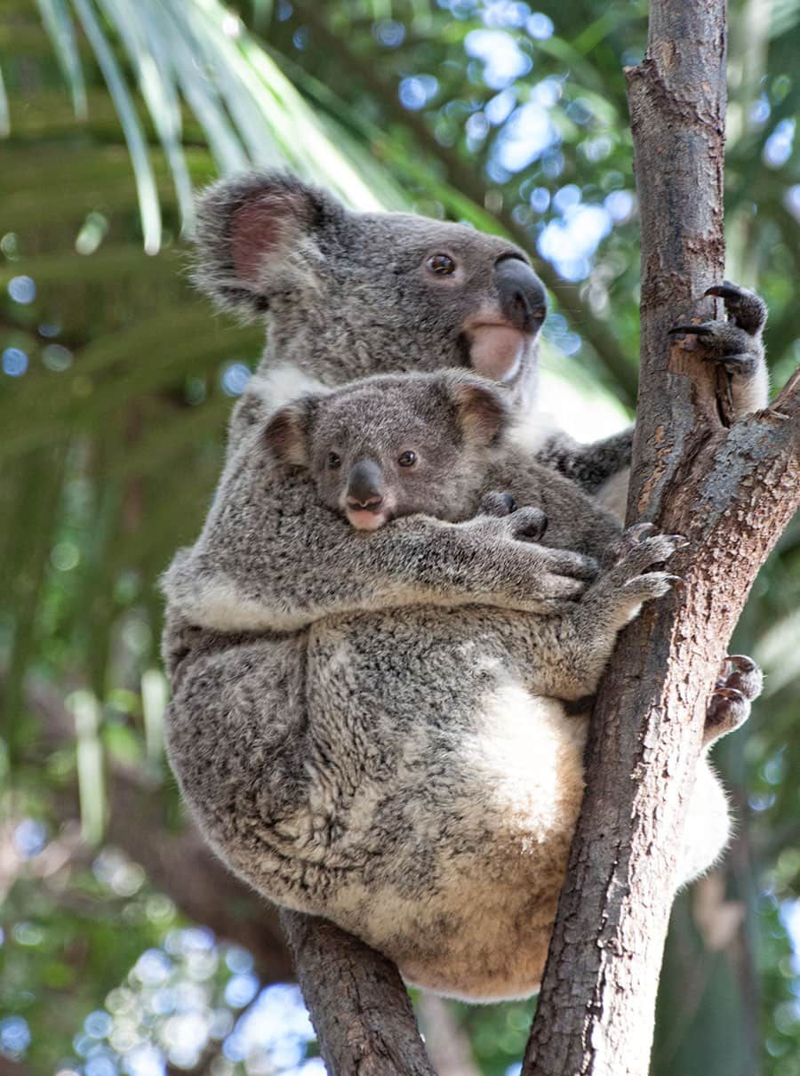 A Visitors Guide to Currumbin Wildlife Sanctuary