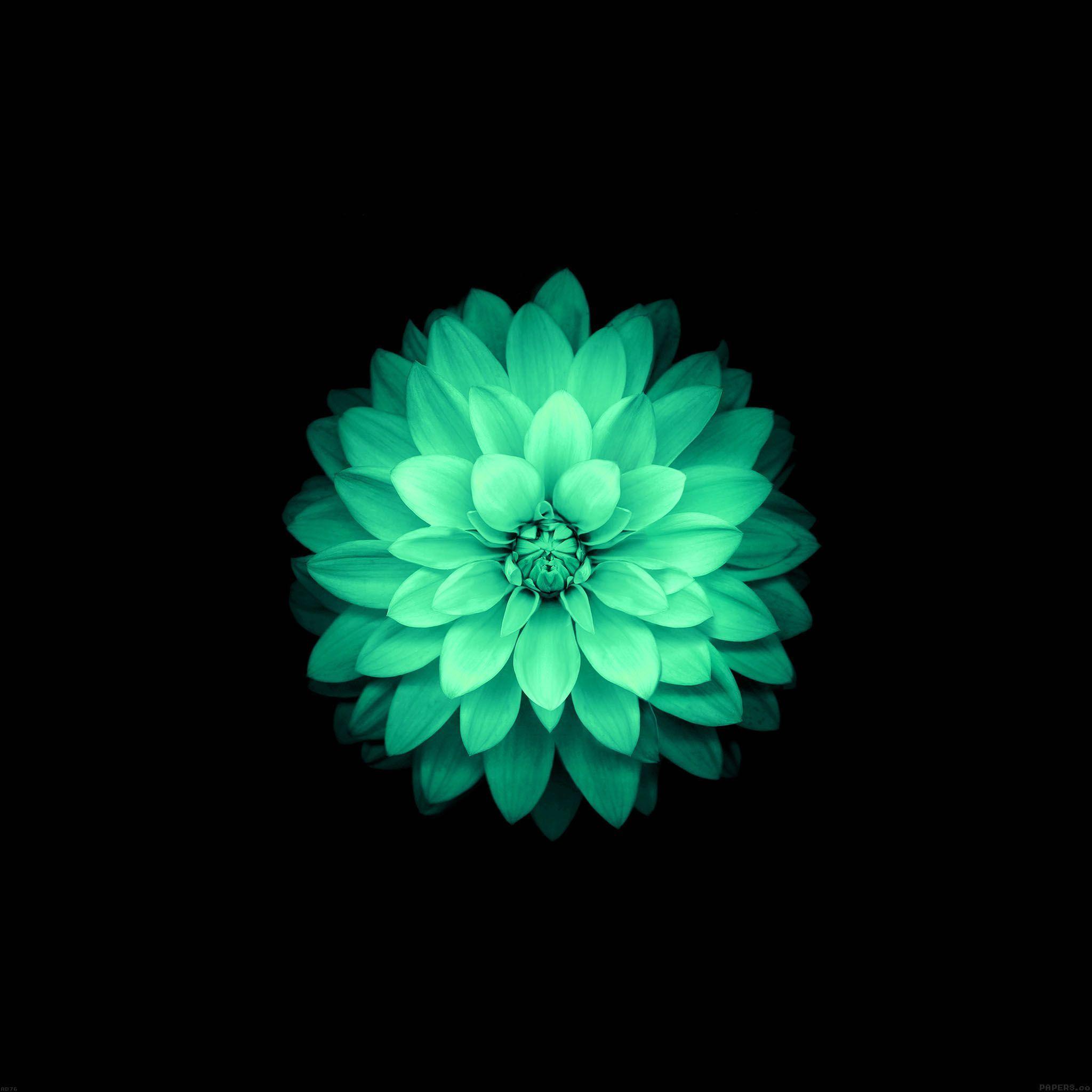 Fond Ecran Tablette Papier Peint A Fleurs Fond D Ecran Iphone Fleur Fond D Ecran Android