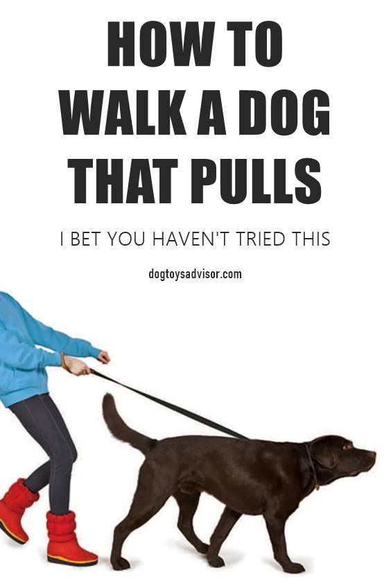 Pulling On The Leash Is One Of The Most Common Behaviour Problems Here S How To Stop A Dog Pulling In Minutes Not Days Or Weeks Dog Training Puppies Dog Brain