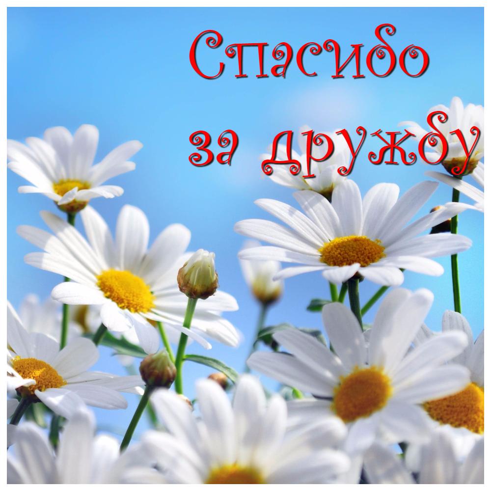 Дорогі друзі, хороші, близькі, далекі, давні і нові ТМ Яскрава вітає Вас всіх З МІЖНАРОДНИМ ДНЕМ ДРУЗІВ! Дякуємо за щирість, чуйність і інтерес до нашого інтернет-магазину. І нагадуємо про нашу програму лояльності для постійних клієнтів: http://yaskravaklumba.com.ua/programma-loialnosti