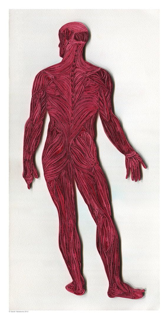 Full Figure Muscle Structure poster Doctor por YakawonisQuilling