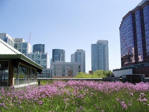 Extensive Green Roofs The Essential Guide Green Roof System Green Roof Green Architecture