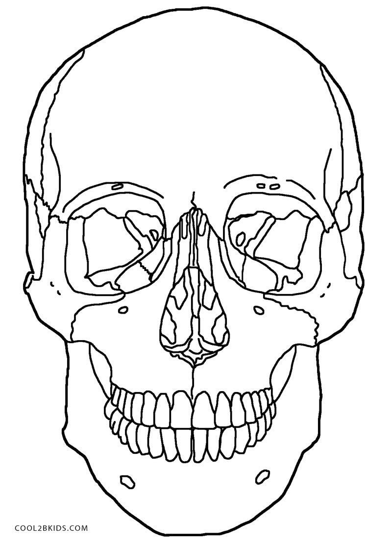Anatomy-Skull-Coloring-Pages.jpg 800×1,108 pixels | Tus "|800|1108|?|4ccc7621d03c5cbe76152449cbc756b3|False|UNLIKELY|0.3619833290576935