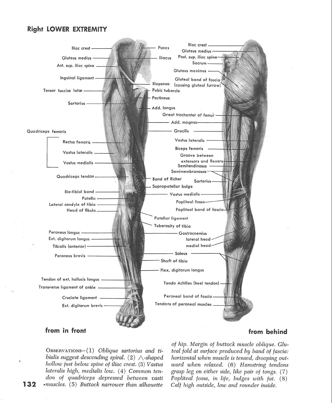 Muscles of Right Leg Front & Back | рисунок, скульптура | Pinterest ...