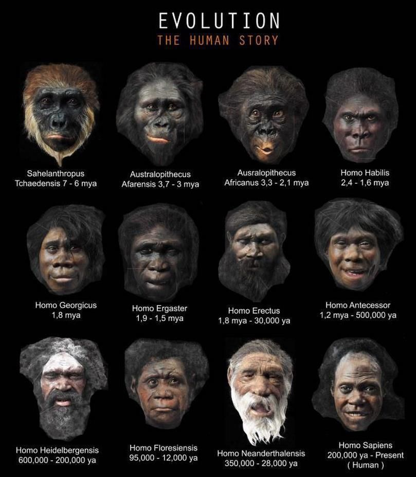 human evolution pictures - Cerca amb Google | Interesting Find ...