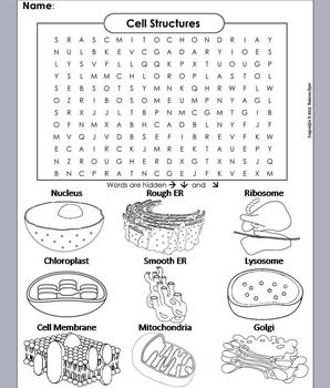 Cells and Organelles Review Worksheet: Word Search/ Coloring Sheet ...