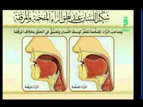 شكل اللسان عند نطق الراء المفخمة والمرققة Youtube Tajweed Quran Family Guy