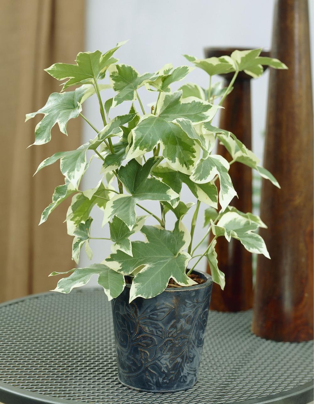 11 Zimmerpflanzen für dunkle Ecken