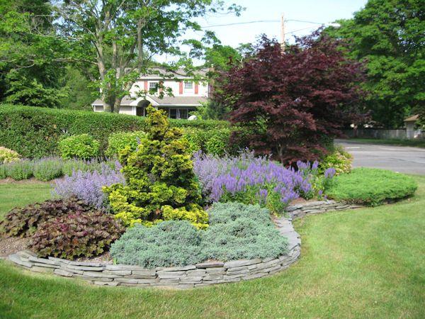 before after pictures evergreen shrubs kaste design