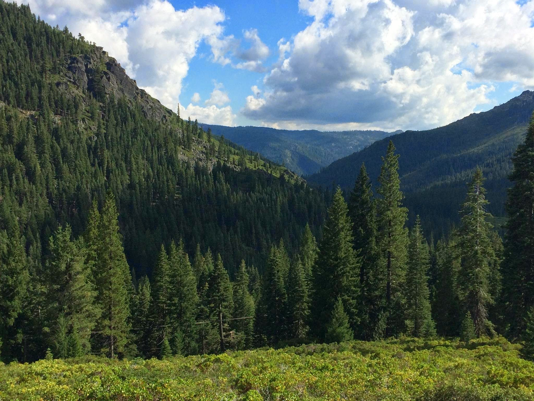 Plumas National Forest Skyline in California