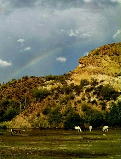 A rainbow graces the already beautiful landscape and horses by Saguaro Lake. 8/2015 by B.B.