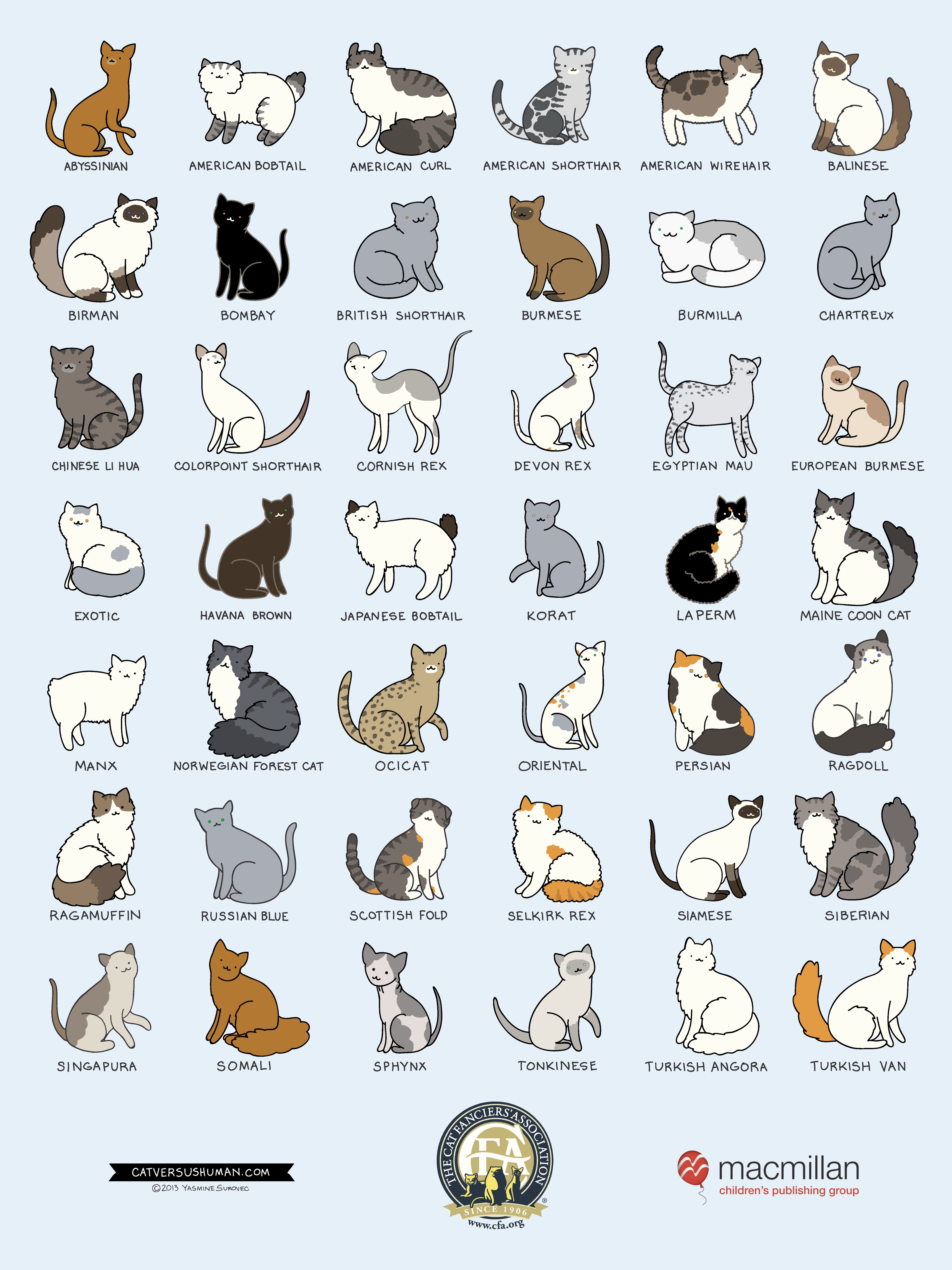 Breeds of Different Animals on Amazing Charts Cat breeds