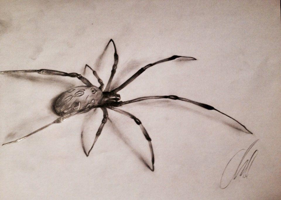 rysunek pająka