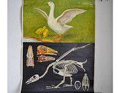 Vintage Pull-down-Diagramm Goose Schule Diagramm 1960er Jahre Wohnkultur Zoologie, GermanEducational Schule drucken Poster Wandkunst Shabby Chic Landhaus