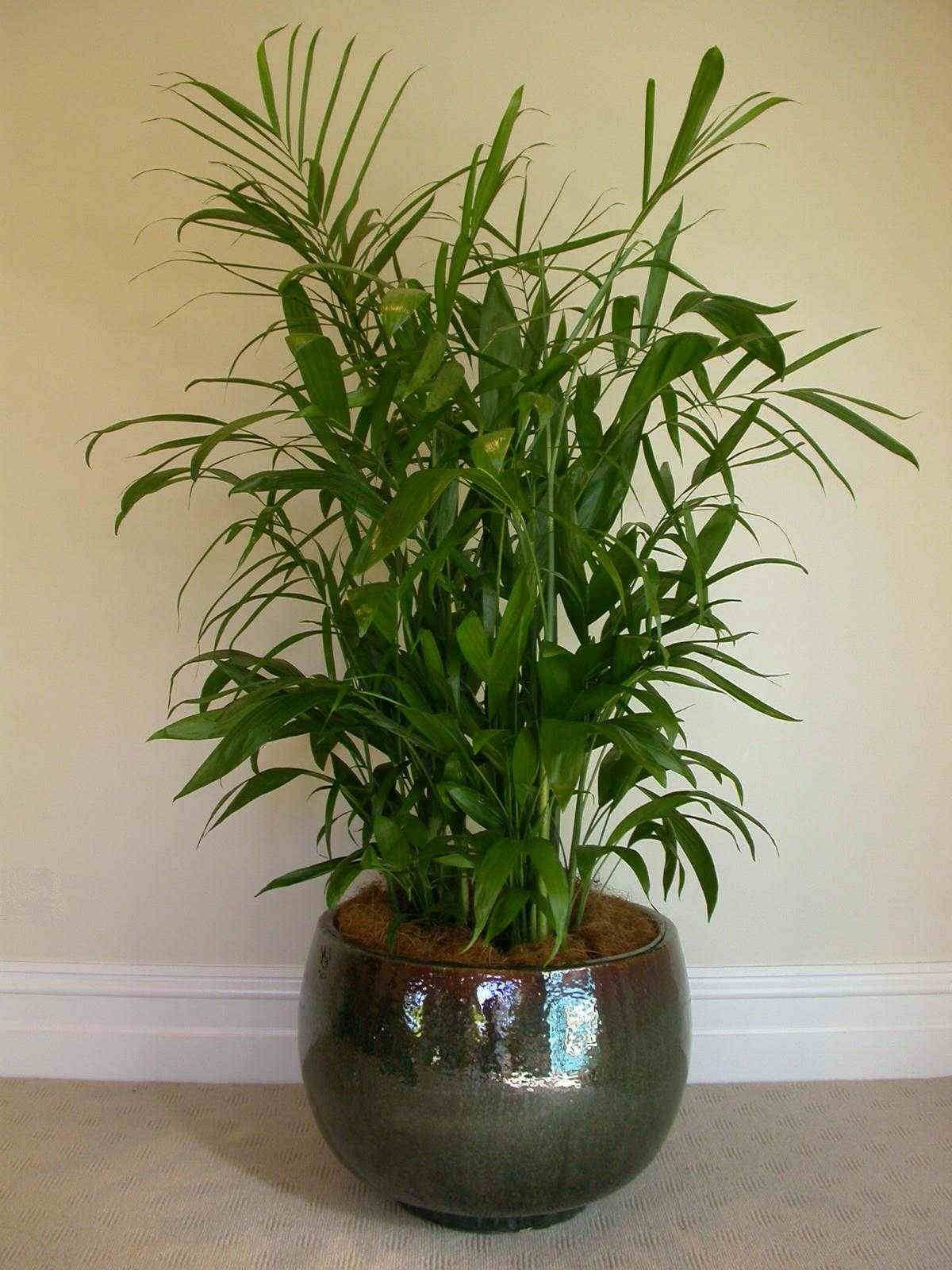 nontoxic house plants for better IAQ Living Room