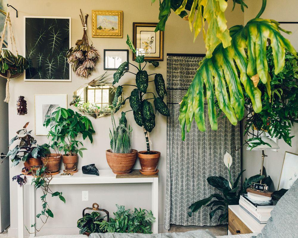 Tour Hilton Carter S Plant Filled Loft Living Room