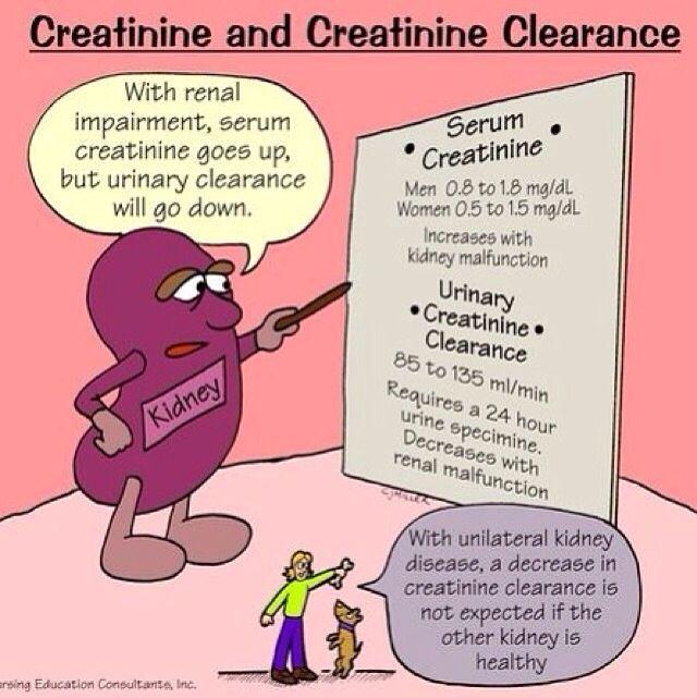 Creatinine - Nursing school flash card