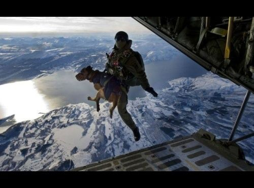 Haha This Is Pretty Awesome Delta Force Reconnaissance Dog