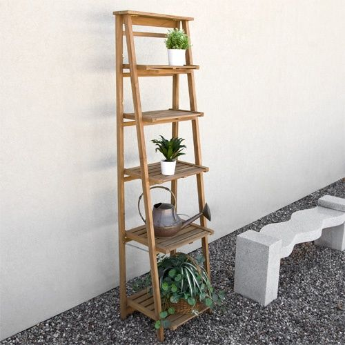 tall teak plant quality stands photograph