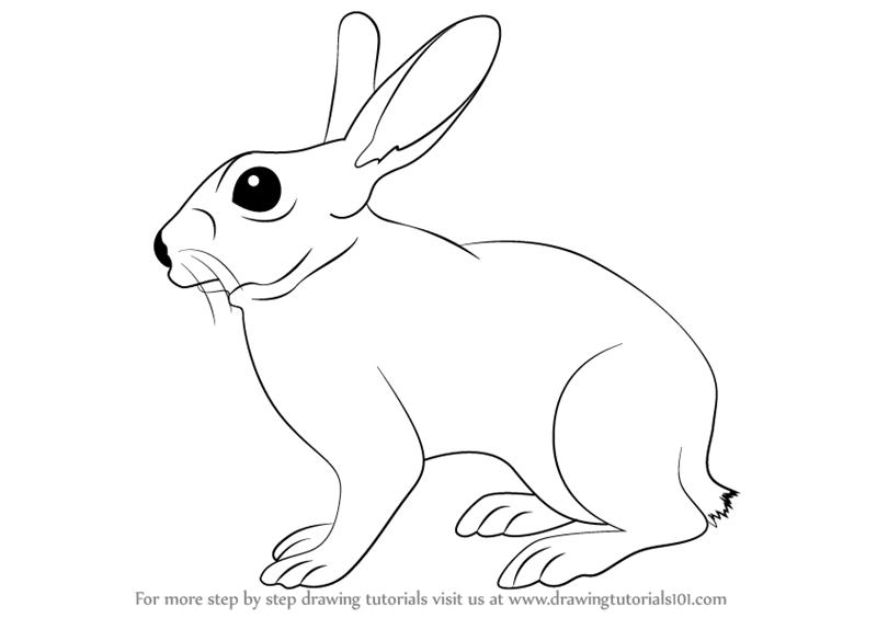 Bunny Tail Drawing Google Sok Animal Line Drawings Easy Animal Drawings Cute Baby Horses