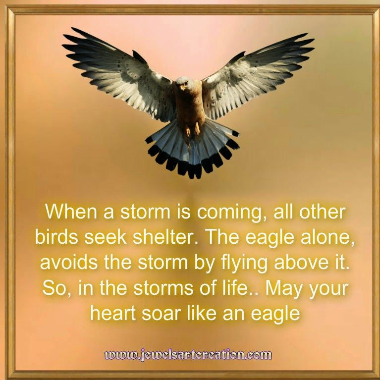 Eagle Quotes Storms Of Life Strength Soar Like An Eagle