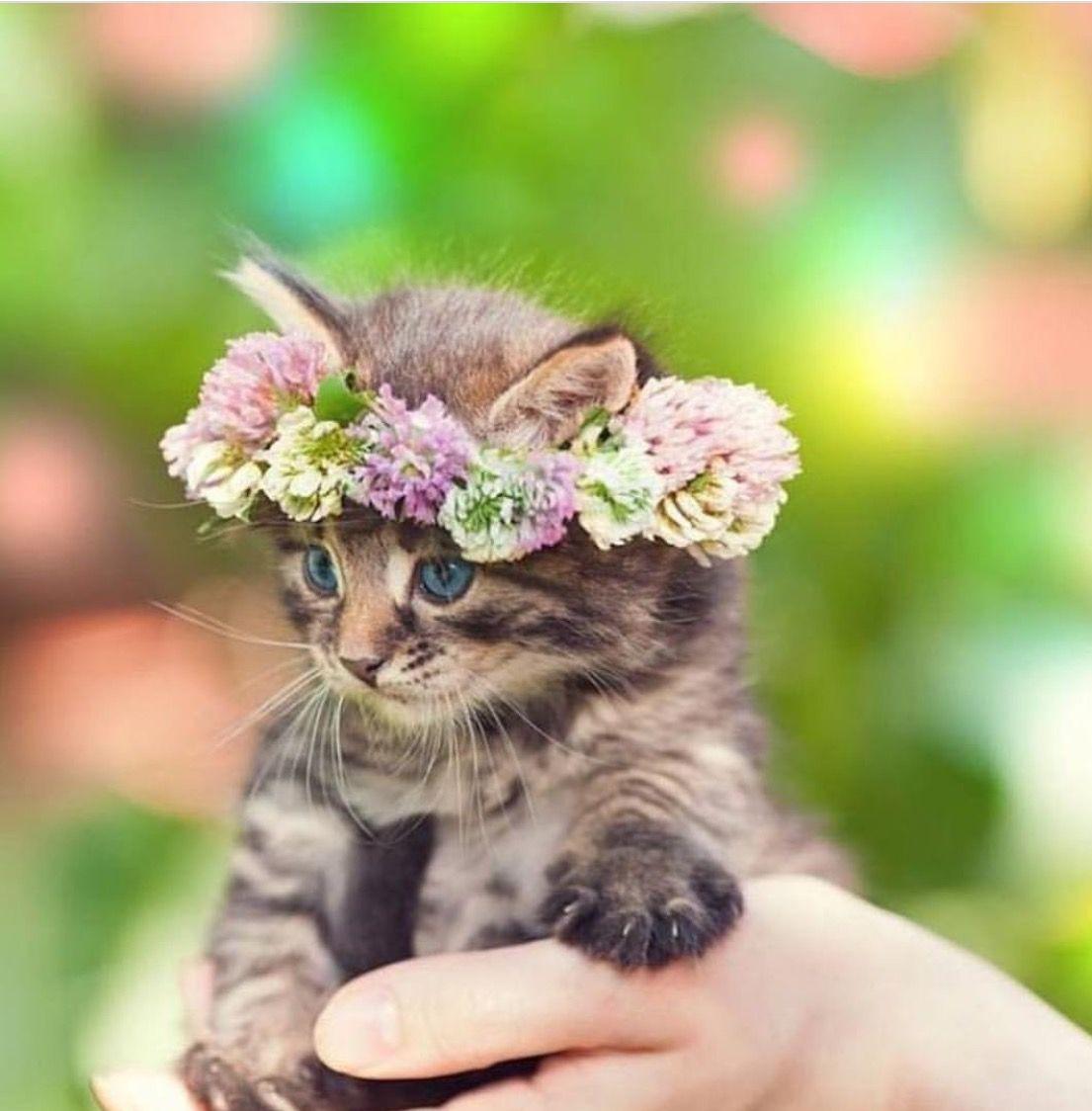 Ahh This Is Such A Precious Pic So Adorable Cute Animals Kittens Cutest Kittens