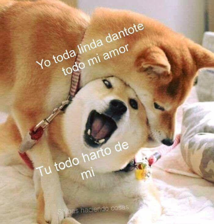 Pin De Yelawolf 3 En Mascotas Y Animales Animales Frases Chiste De Novios Memes Romanticos