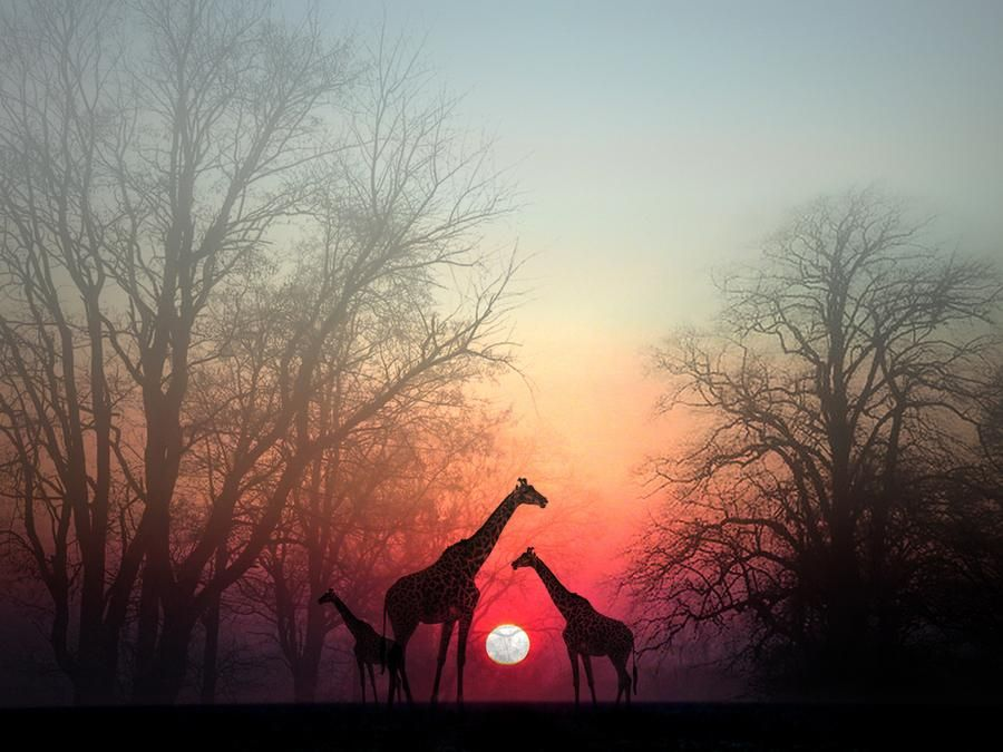 Giraffe Photo by Perri Kardashian -