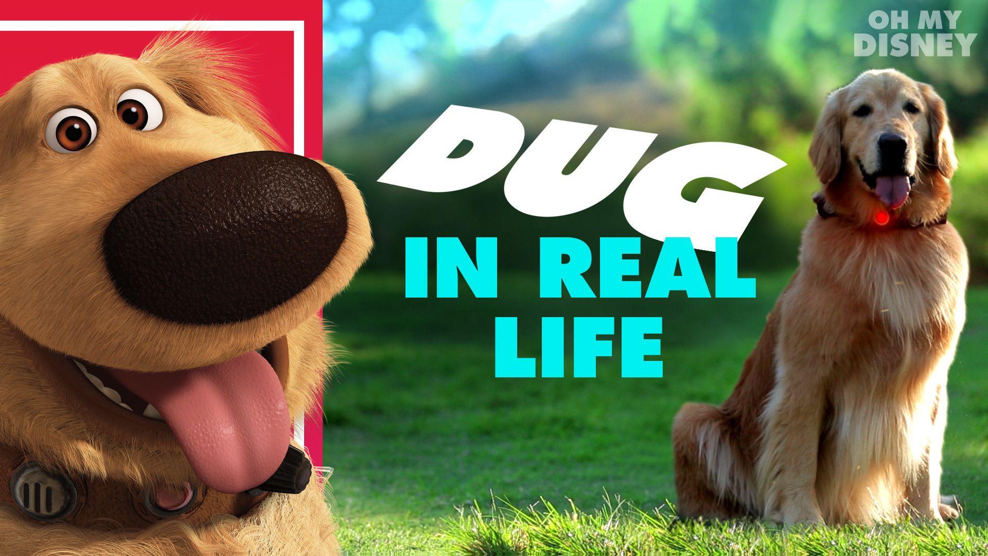 Disneypixars dug the talking dog in real life oh my