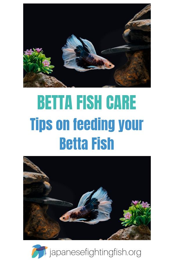 Betta Fish Feeding Instructions The Best Betta Fish Food Betta Fish Care Betta Betta Fish