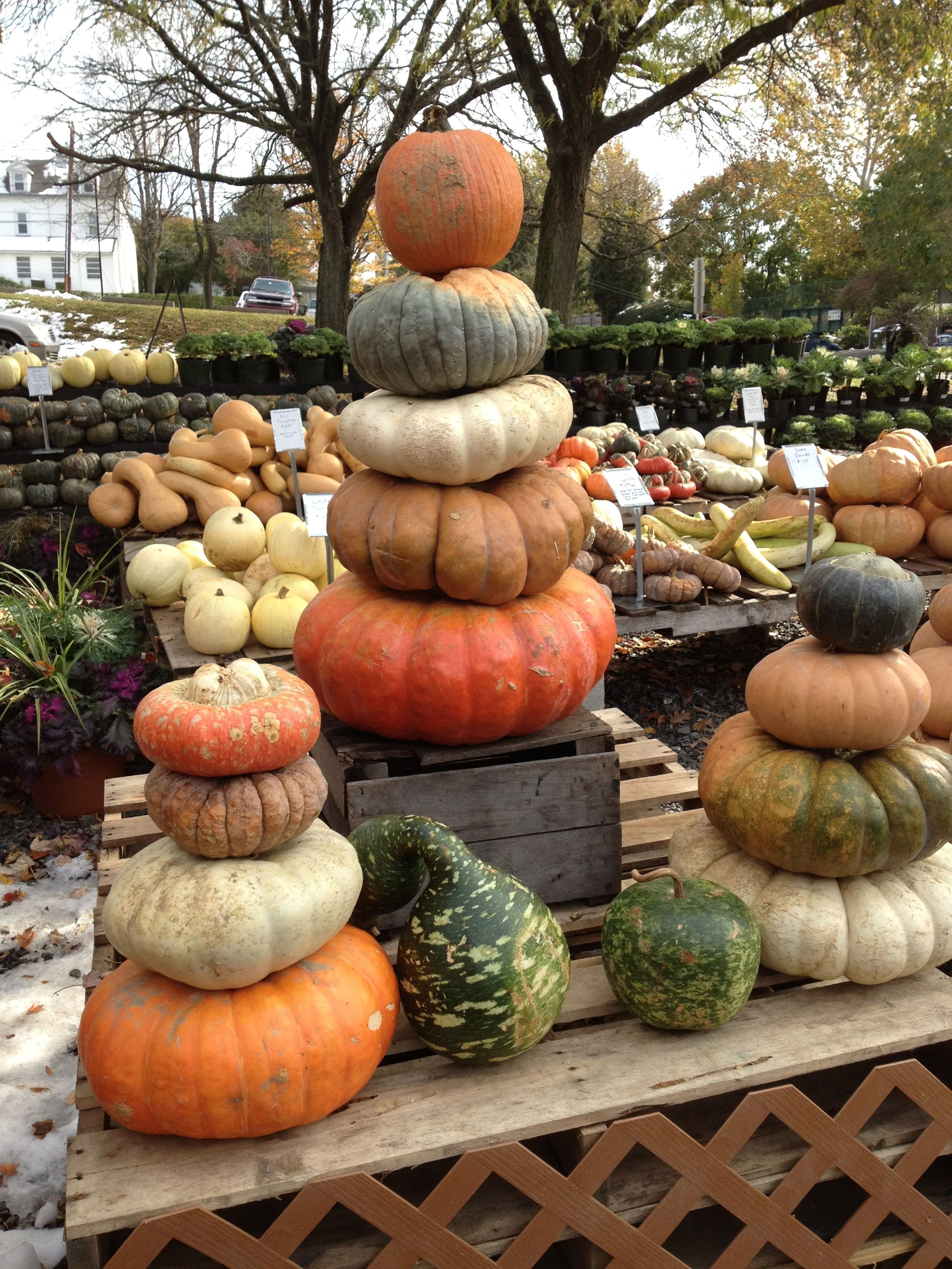 Lovely Stacked Pumpkins. Amazing Design